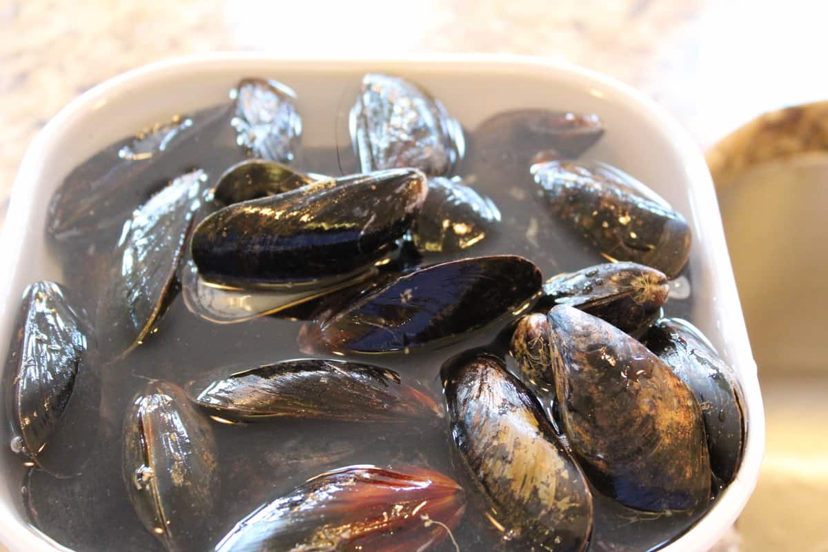 Mussels in Water